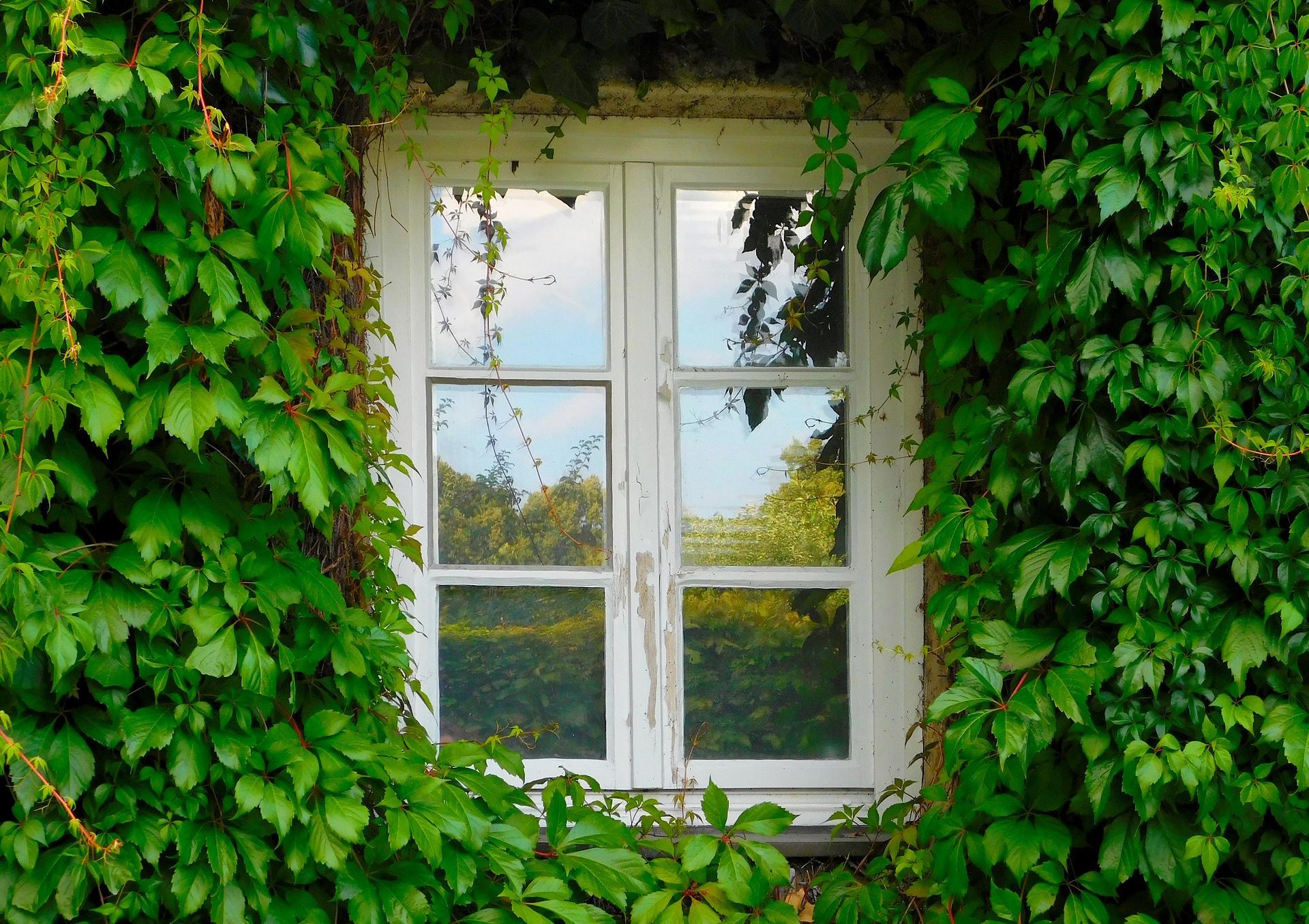 Fensterpflege